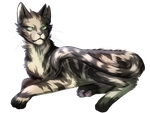WARRIORS 007- Longtail by Marshcold