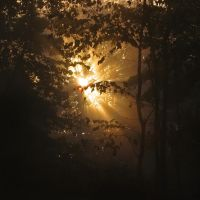 Obscured Light III by Photopathica