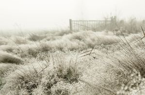 empty pasture by The-Sentenced