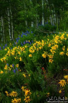 Wildflowers Of Crested Butte by kkart