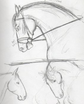 Day 15- Horses by OrcaTeeth