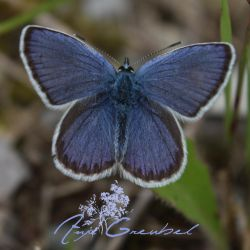 Blue as a Butterfly by SymphonicA19