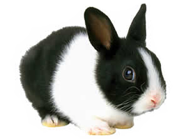 Rabbit 001 PNG by NotStopSmile