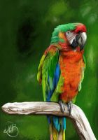 Parrot by lolila