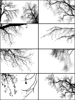 Tree Borders III by midnightstouch