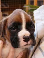Rolo, 4 Weeks. by Iron-Star