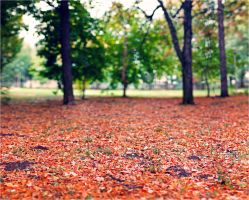 Autumn is coming! by dragos495