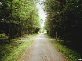 Vermont Trail by enc86