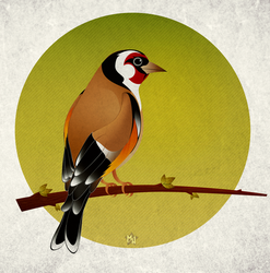 Goldfinch by keneda999