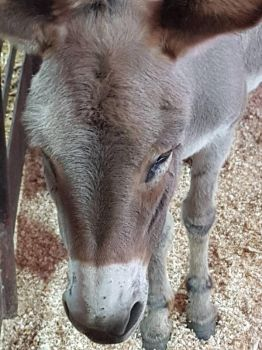 close up donkey  by MyLoveForYouEternity