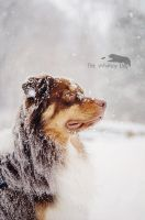 The Winter King. by Whimsydogstudio