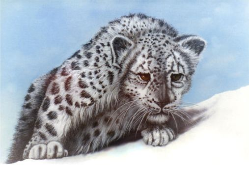 Snow leopard by PabloRitter