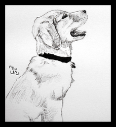 RGD 8 - Dog by TheUnconfidentArtist