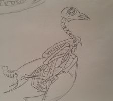 Pigeon Skeleton by GECKO-Nuzlockes