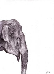 elephant by morbidangel