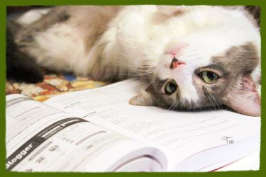 I'm More Fun to Study Than CSS by TeaPhotography