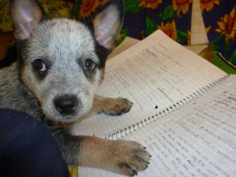 Puppies need to study too by LfurvnQ