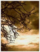 Branches of the Sky by peterzz