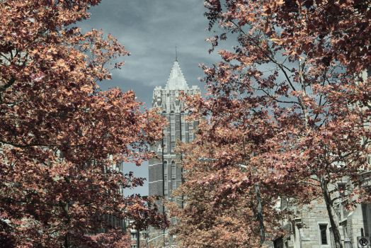 Yale in Infrared 3 by re-dream