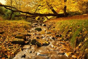 autumn by BellPhotography