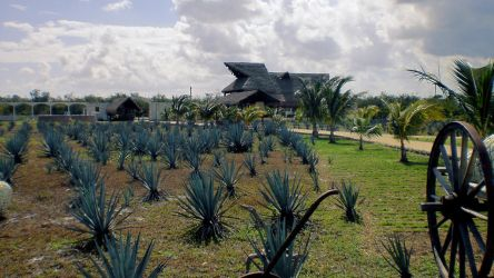 Mas Agave, Mas Tequila by texanguitarguy