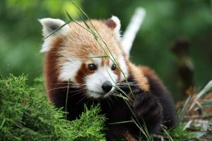 Bamboo by Sabbie89