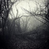 Foggy morning (Picture taken this winter) by SHADE-LJ