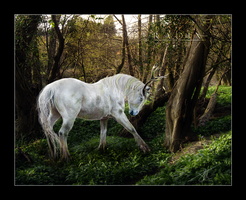 king of the forest - radix... by forgotten-mysteries
