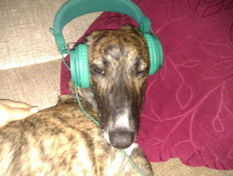 DOG LISTENING TO GAY SEX TAPE by Dr-Quollchops