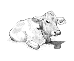 Serene Cow by juliano7s