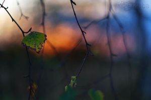 sunset colours by efeline