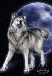 Canis Lupus by jocarra