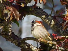 Blinking House Sparrow by wolfwings1
