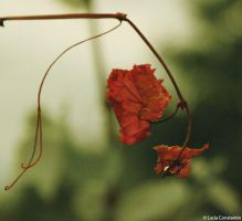 Feuille by LuciaConstantin