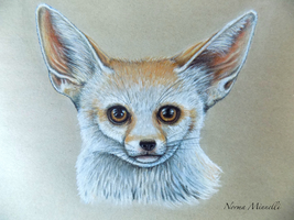Cute fennec fox (Pencilart) by Usitatus