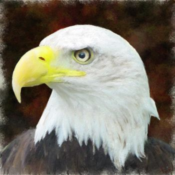 Eagle by fmr0