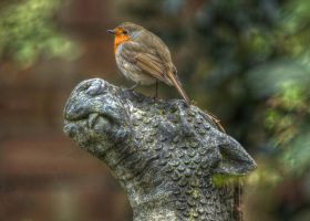 Robin Dragon Hdr by teslaextreme