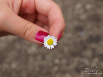 Beautiful daisy by Eveely