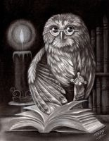 Owl and Book by TodoArtist