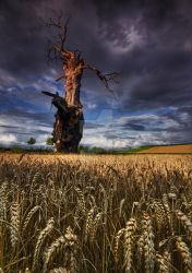 Field of Dreams by DL-Photography
