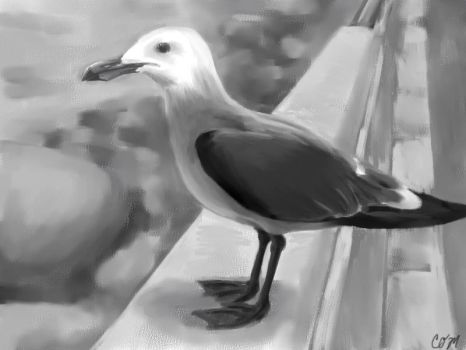 Seagull by cocowash