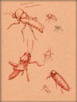 Insect Study 1 by LordMaru4U