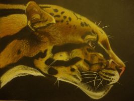 Clouded Leopard by xXxParabolaxXx