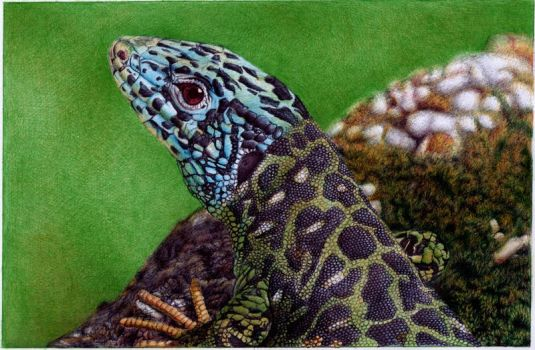 Water Lizard - Bic Ballpoint Pen by VianaArts