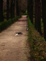 Cats of Buen Retiro by Margotka