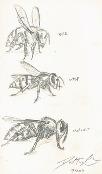 Bees wasps and hornets - Oh my by dtchen