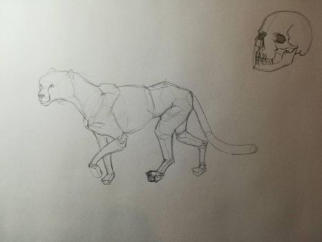 Cheetah structure practice and a skull by Andrix9743
