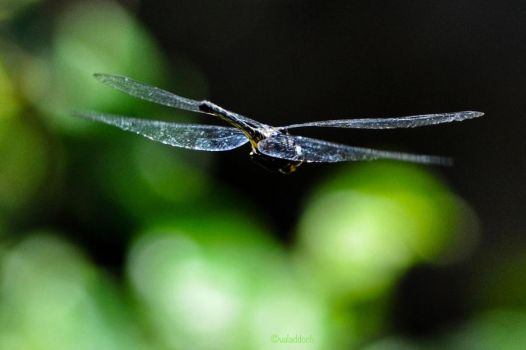on the fly II by valaddoch