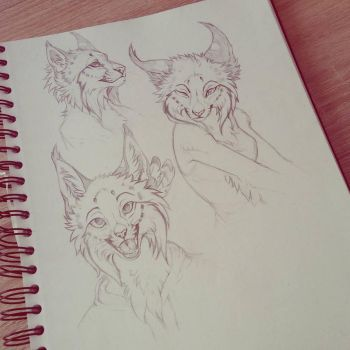 Lynx sketches by Kay-Ra