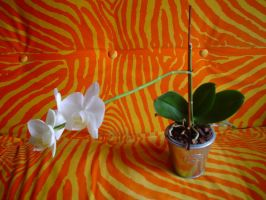 Orchid 2 by Suadela